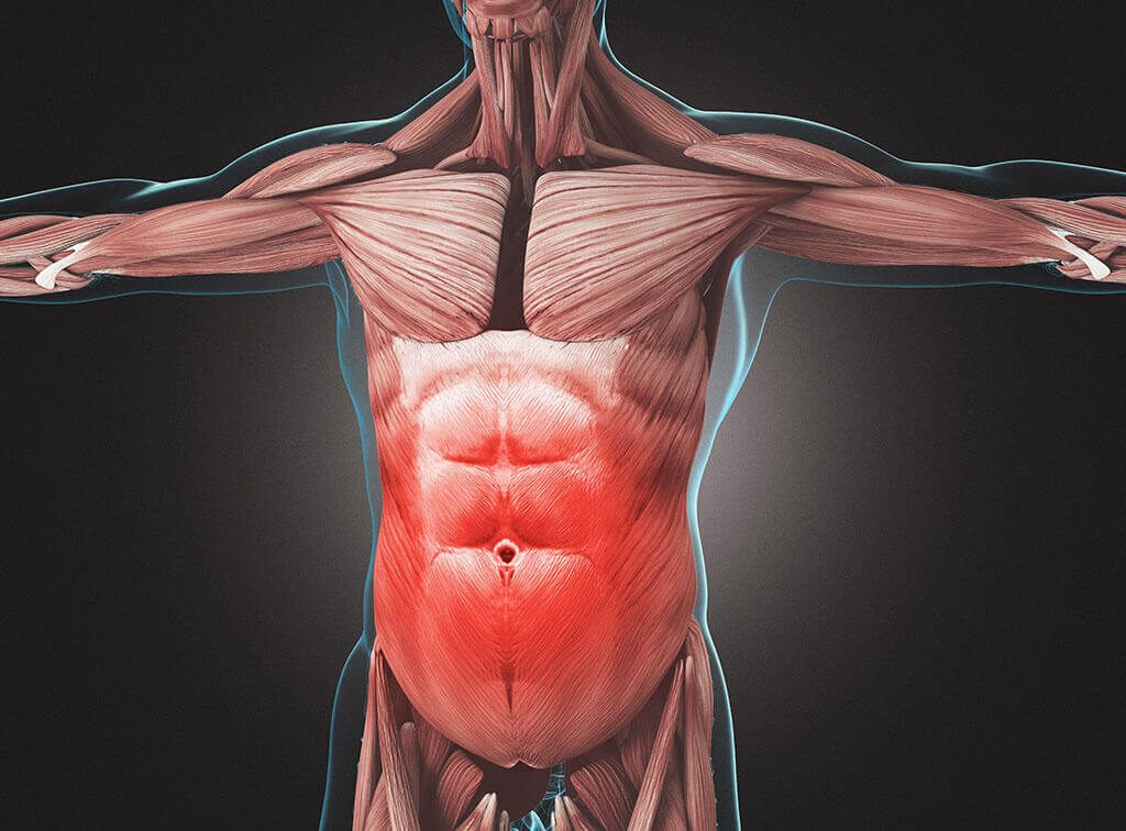 腹筋の構造と特性