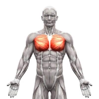 大胸筋 構造