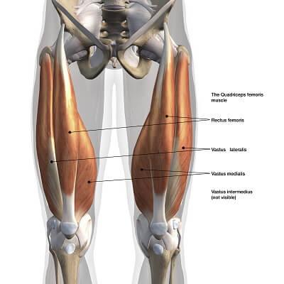 ダンベルスクワット 大腿四頭筋
