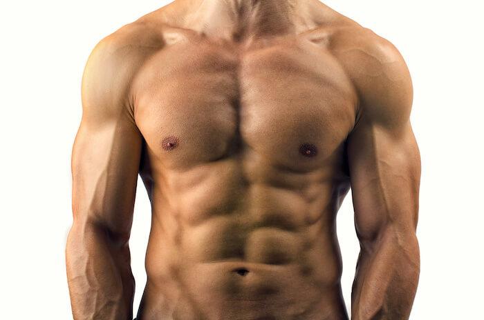 体幹は「胴体」の部分