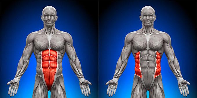 腹直筋下部と腹斜筋(ふくしゃきん)を集中的に強化