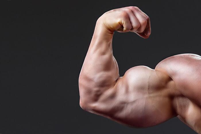 上腕二頭筋の短頭を鍛えて、力こぶの高さをだす
